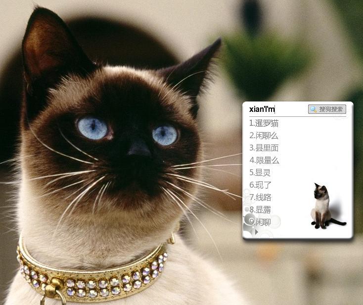 可爱暹罗猫 - 搜狗拼音输入法