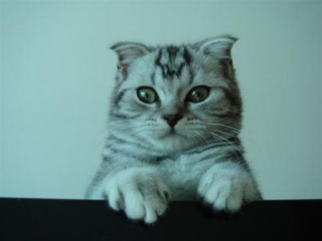 立体手工小猫步骤图解